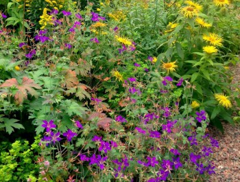 Purple and Gold Flowers