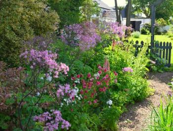 Cottage Garden Plants