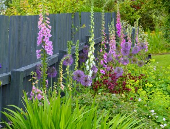 Foxgloves and Alliums